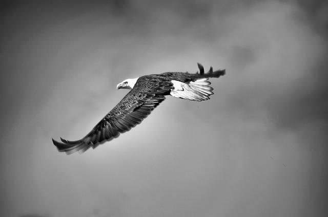 eagle-1029909_640