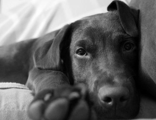 Mach's gut, Bello: Warum wir so stark um unsere Haustiere trauern
