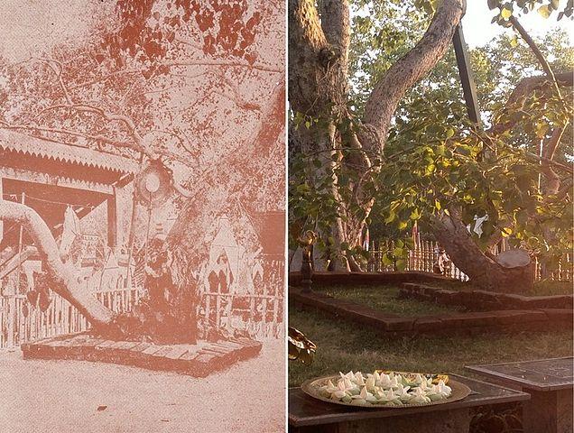 636px-Photograph_of_Jaya_Sri_Maha_Bodhi_Anuradhapura_Sri_Lanka