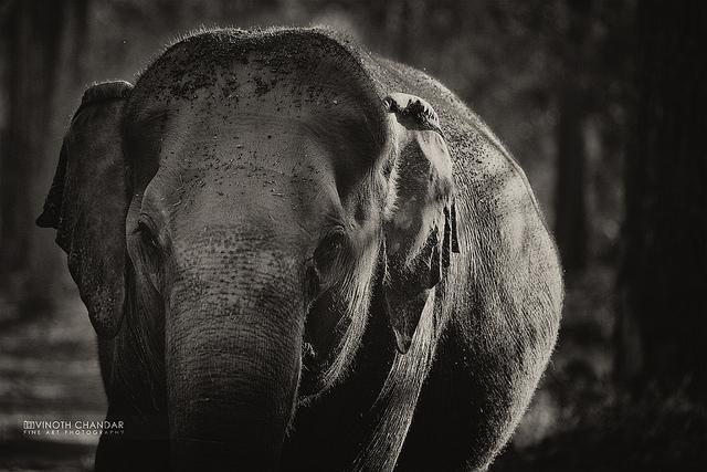 Der Elefant Im Dunklen Raum Eine Kurze Geschichte Mymonkde