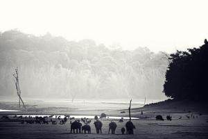 elefant-freiheit