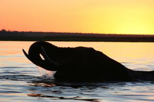 elefant-planscht