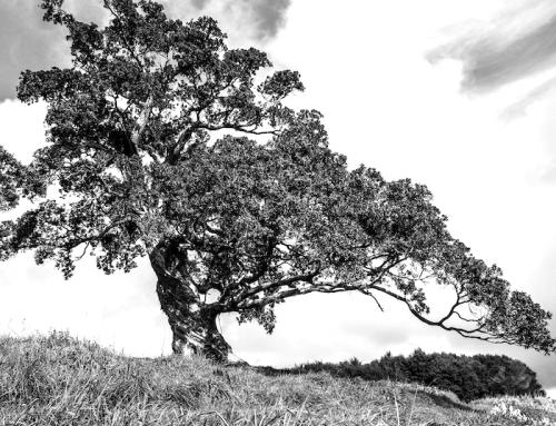"""Sei wie der hässliche alte Baum (Du musst nicht immer """"nützlich"""" sein)"""